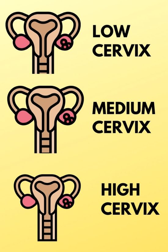 menstrual cup chart